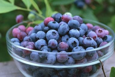 Eat blueberries to enhance memory, vision!